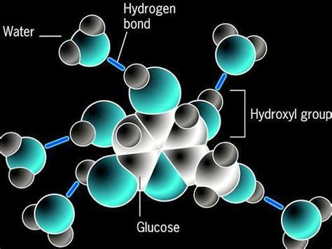 Biomolecules Assignment Help | Biomolecules Assignment ...