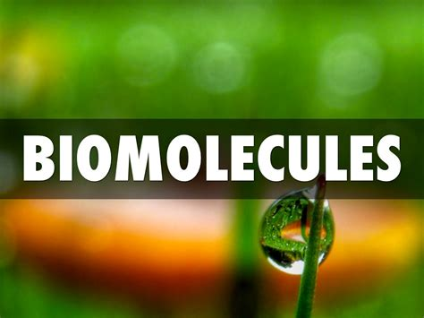 Biomolecules by Mitchell Moreno