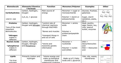 Biomolecules Chart - Google Docs