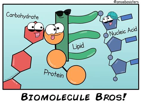Biomolecules: Different molecules but all important for ...