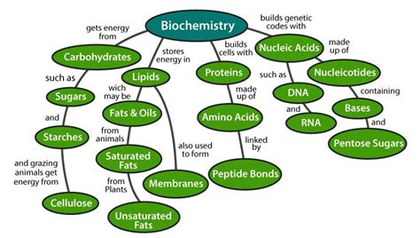 Biomolecules in Living Organisms- The Four Types Of ...