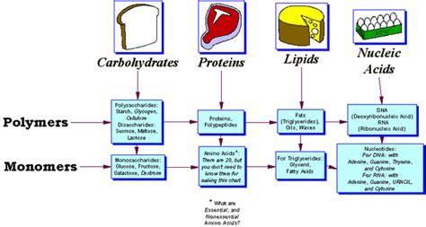 biomolecules - my sites