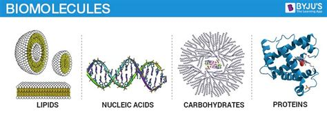 Biomolecules Proteins | Structure And Function Of Biomolecules