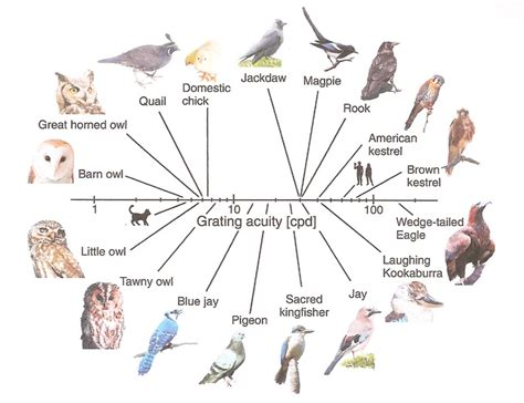 Bird Brain II