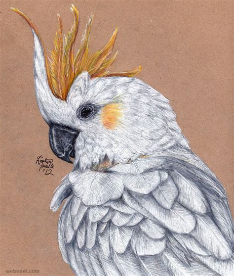 bird drawing 20 - preview