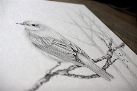 Bird Drawings In Pencil | Amazing Wallpapers