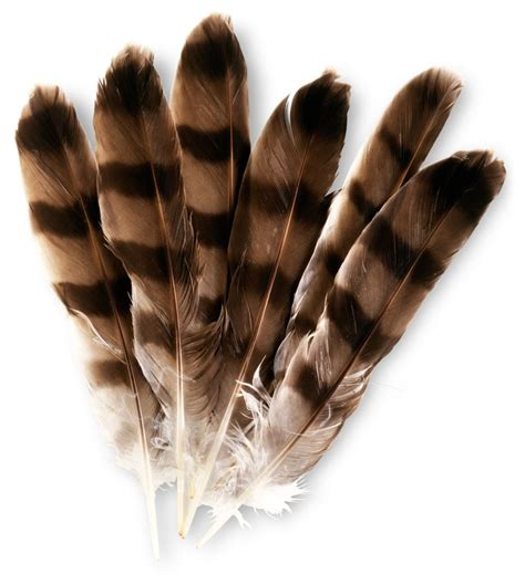 Bird Feathers | Types of Feathers | DK Find Out