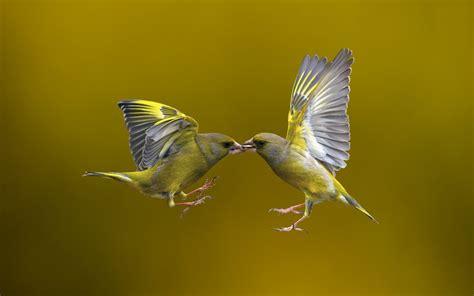 Bird Flying Nature wallpaper   1680x1050   #11712