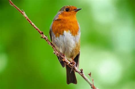 Bird Free Stock Photo - Public Domain Pictures