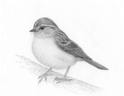 bird pencil drawing artist   Fine Art Blogger