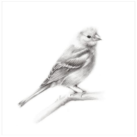 Bird Pencil Drawing Print