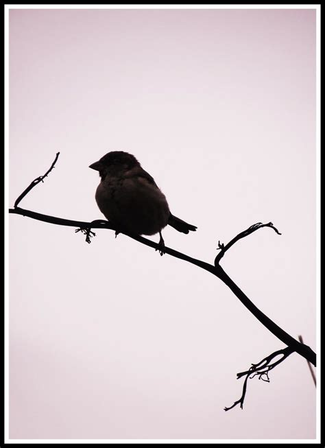 Bird Silhouette by basement-ghost on DeviantArt