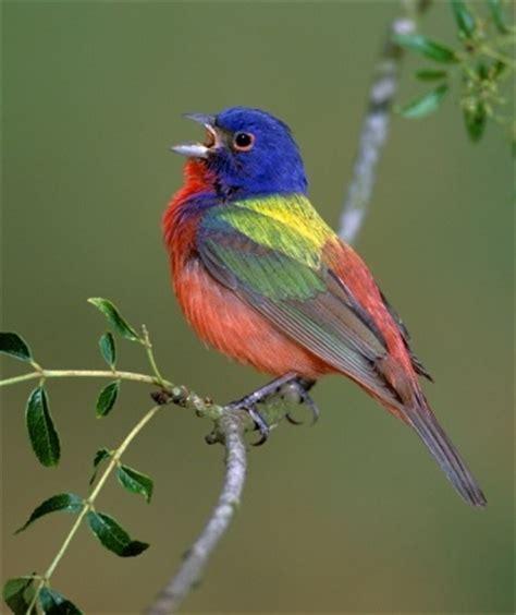 Birds, 3   Dusky's Wonders