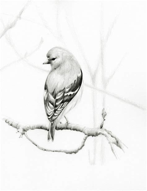 Birds Drawings In Pencil