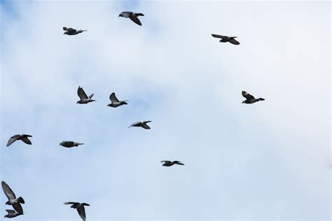 birds flying - 100 More Photos
