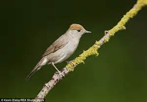 Birds increasingly travel to the UK rather than Spain ...