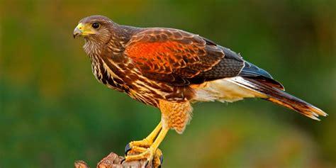 Birds Moments