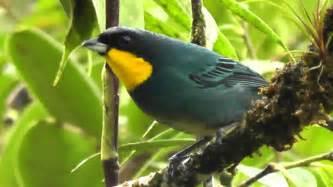 Birds of Colombia / Aves   Reserva Natural de las Aves Las ...