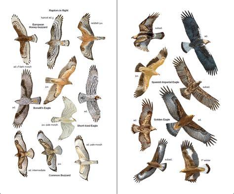 Birds of Spain   Lynx Edicions
