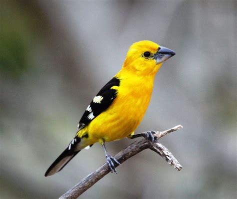 Birds of Tropical Paradise – ecotoursvallarta.com