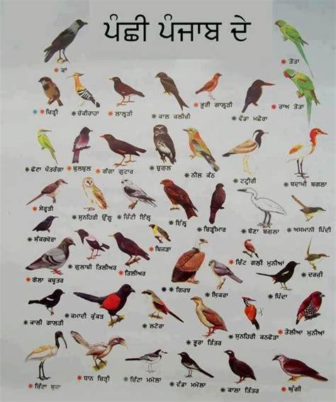 Birds & their names in gurmukhi punjabi ~ Punjabstate