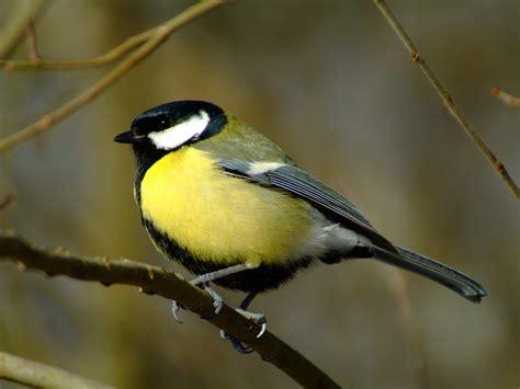 Birds | Wallpapers Inbox