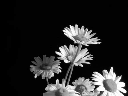 black and white flowers on Tumblr