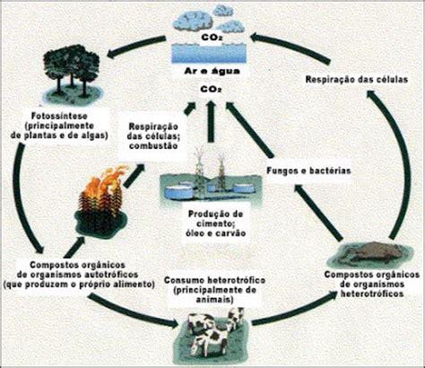 Blog Biocurioso - curiosidades e novidades !: Dezembro 2009