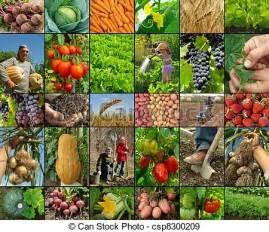 Blog de Ana Cob: El Sector Primario: Agricultura ...