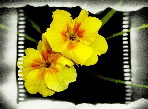 Blog de floristerías Mar de Flores en Madrid