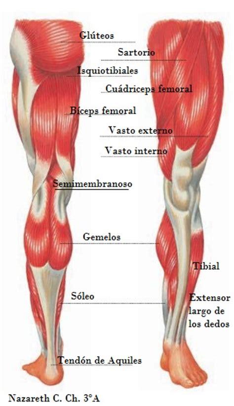 Blog de Nazareth: Músculos de las piernas - Legs muscles
