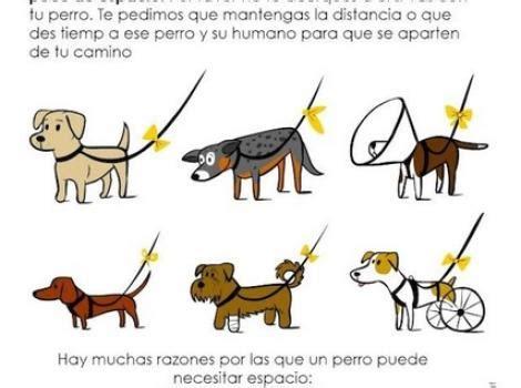 Blog de viajes con perros y actividades #petfriendly ...