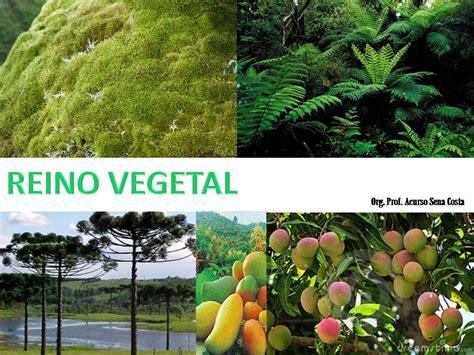 Blog do Prof. Acurso Sena Costa: Reino Plantae