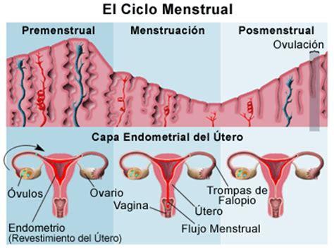 ::Blogg::~: ¿Qué es el Ciclo Menstrual?...