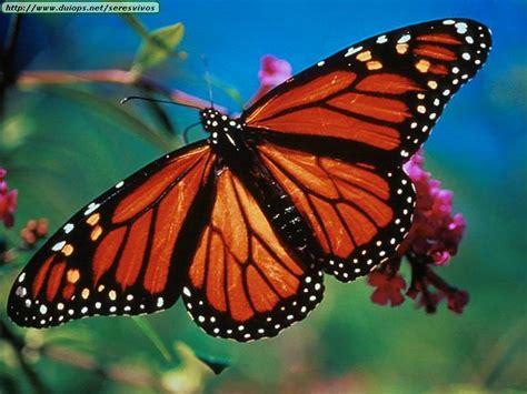 Blue Butterflies | Chessalee