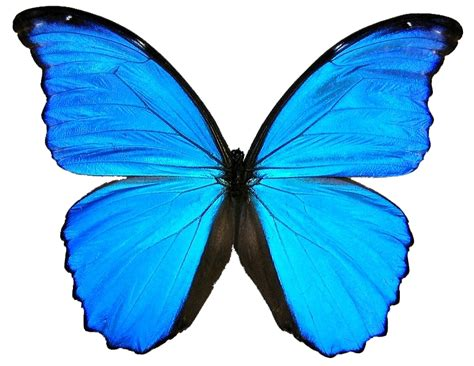 Blue Butterfly Images - Cliparts.co