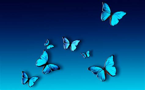 Blue Butterfly wallpaper | 1280x800 | #82405
