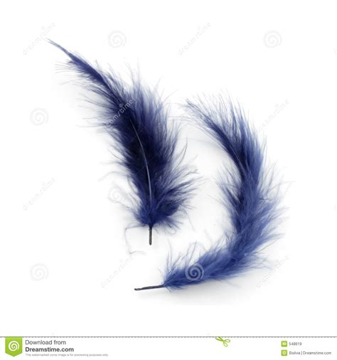 Blue Feathers Royalty Free Stock Images   Image: 548619