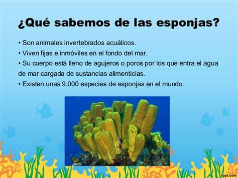 Bob esponja y los invertebrados