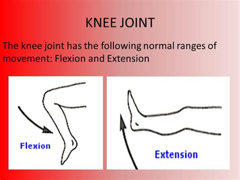 Bones, Muscles, Joints and Movement - ppt video online ...