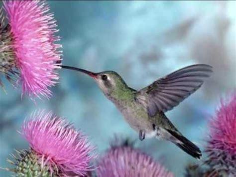 Bonitas imagenes de aves y flores, con musica para ...