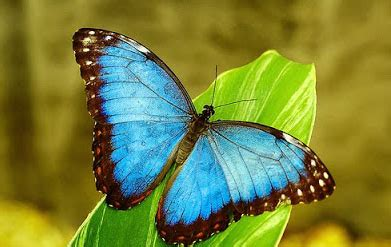 bonitas mariposas bellas | Imagenes De Mariposas