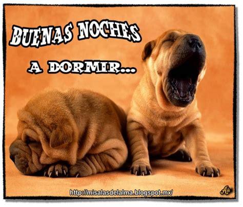 Bonitos perritos con frases de Buenas Noches en imágenes ...
