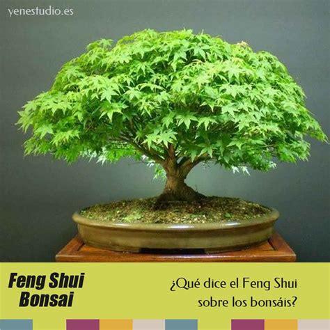 BONSÁIS Y EL FENG SHUI   YEN Estudio