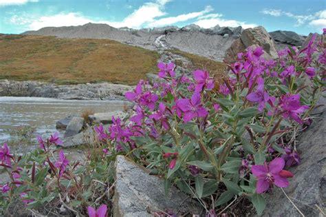 Book: Grönlandflora   Greenland flora