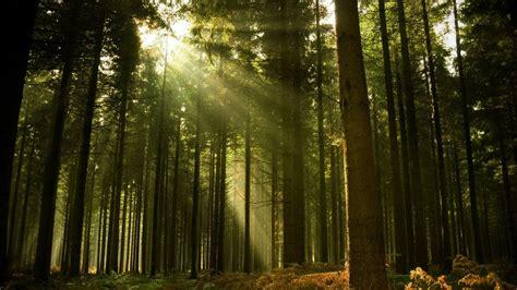 Bosque de Tlalpan, a categoría de Reserva de la Biosfera ...