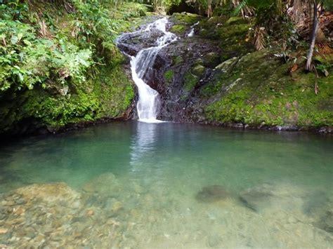 Bosque Estatal de Toro Negro - ZeePuertoRico.com