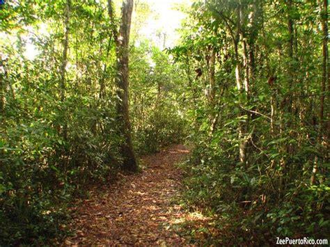 Bosque Guajataca - ZeePuertoRico.com