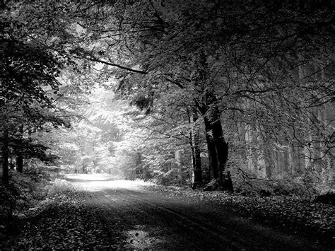 Bosque Mágico En Negro Blanco fondos de pantalla gratis