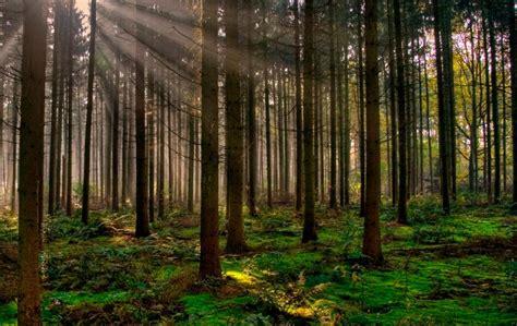Bosque; Qué son, ubicación geográfica y tipos de bosques ...